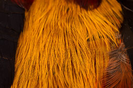 H.S.C. Golden Pheasant Skin Saddle