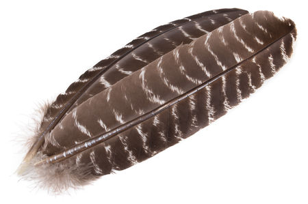 H.S.C. Turkey Wing - Striped Dark Brown
